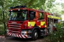 Parrot and puppy rescued from kitchen fire in Whitstable