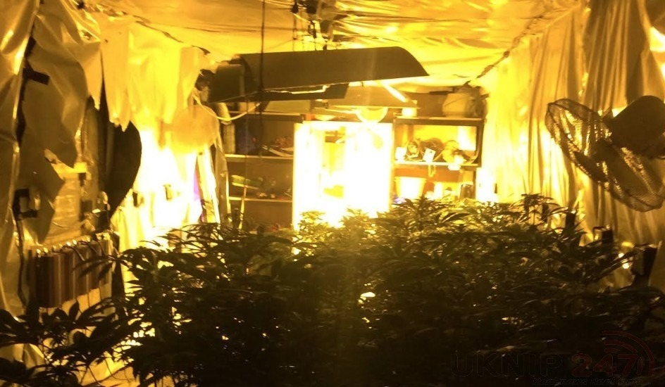 a cannabis cultivation containing almost 300 plants has been uncovered by police in folkestone