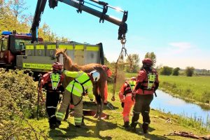 horse rescued from ditch by kent fire service