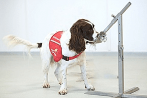 covid 19 detection dogs trial launches