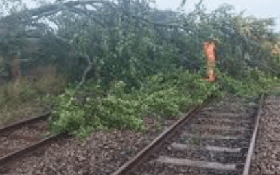 Train delays after tree blocks the line in Folkestone