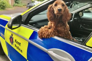 a stolen dog found wandering next to a busy dual carriageway near maidstone has been returned to its rightful owner