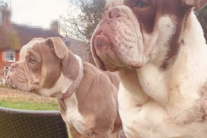 appeal following theft of dogs from ashford area