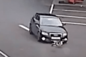 two baby seagulls hit by a black audi in folkestone