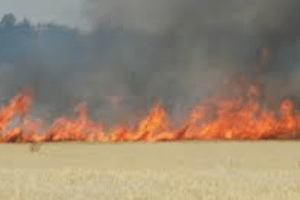 fire crews called to field ablaze near canterbury