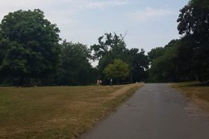 police called to moat park following mortar bomb