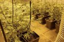 two hundred wraps of heroin and 120 cannabis plants have been seized from an industrial site in iwade